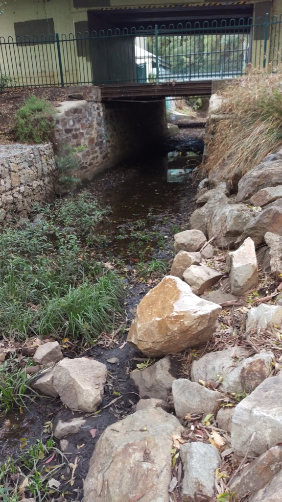 Weeds growing in a creek bed which runs under a bridge, with gabion walls and concreted sides.